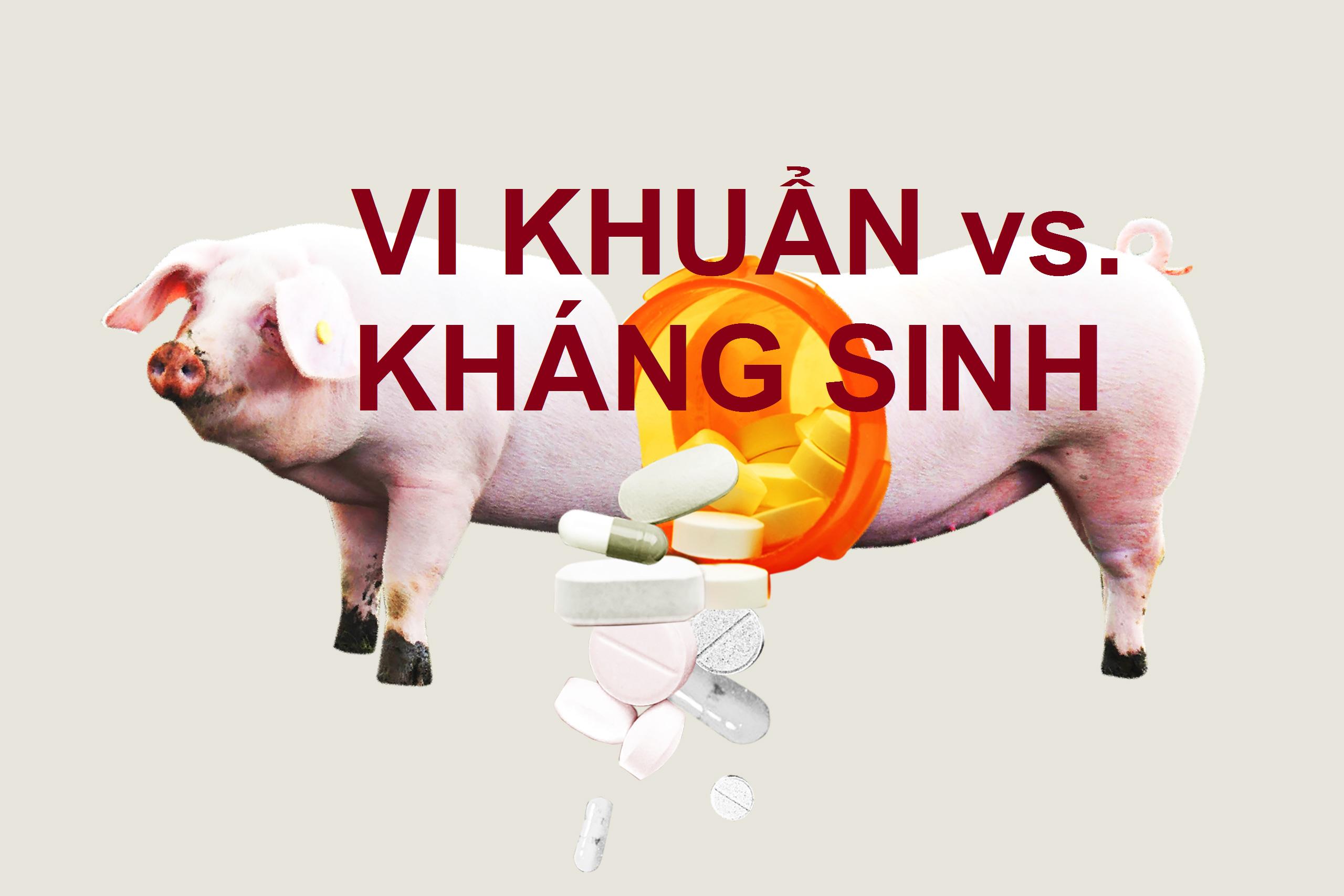 Chăn nuôi đang đối mặt với cơn khủng hoảng kháng sinh
